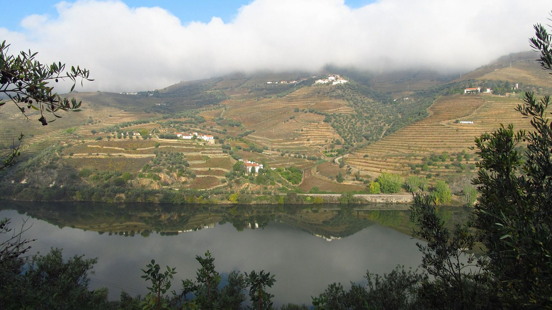 Fog over the Douro river